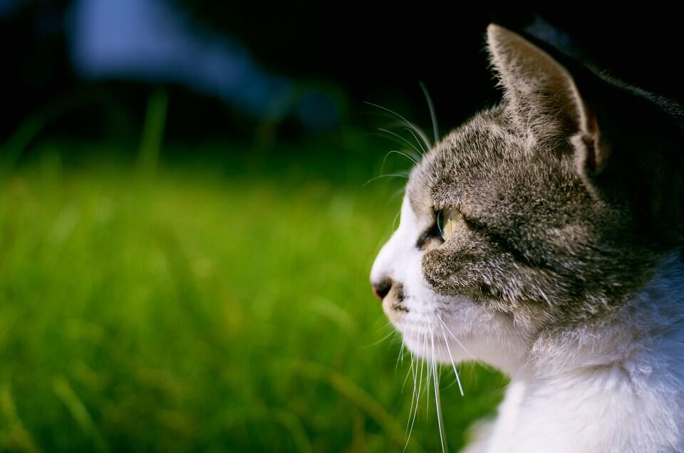 可爱小猫侧脸照