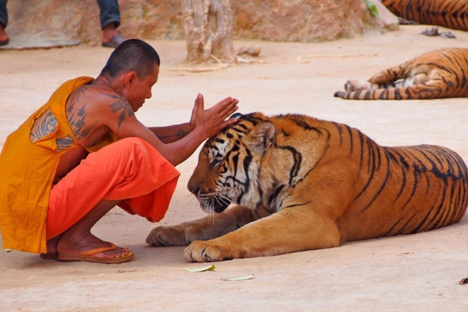 布寺以养老虎而闻名