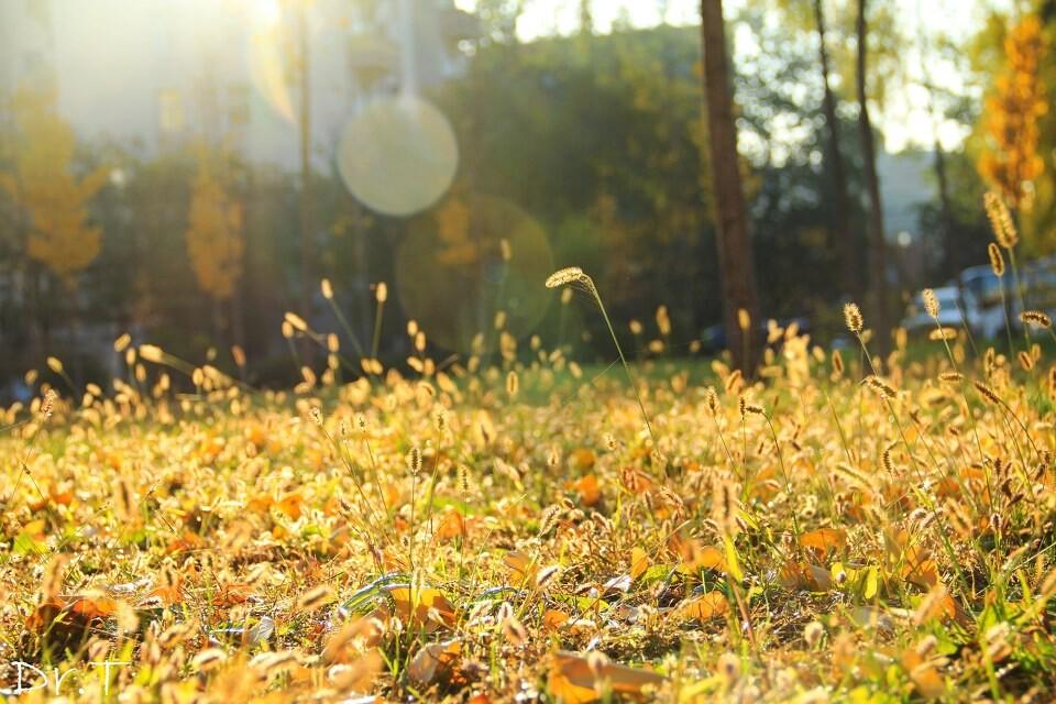 初冬的早晨 枯草萧索 阳光与校园