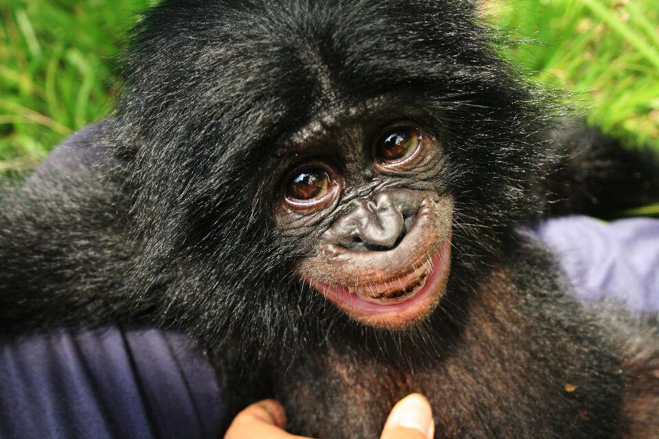 Tickling-4 Lomako@Nursery, Lola<br /> 他的牙齿上还残留着野外植物染上的色素。
