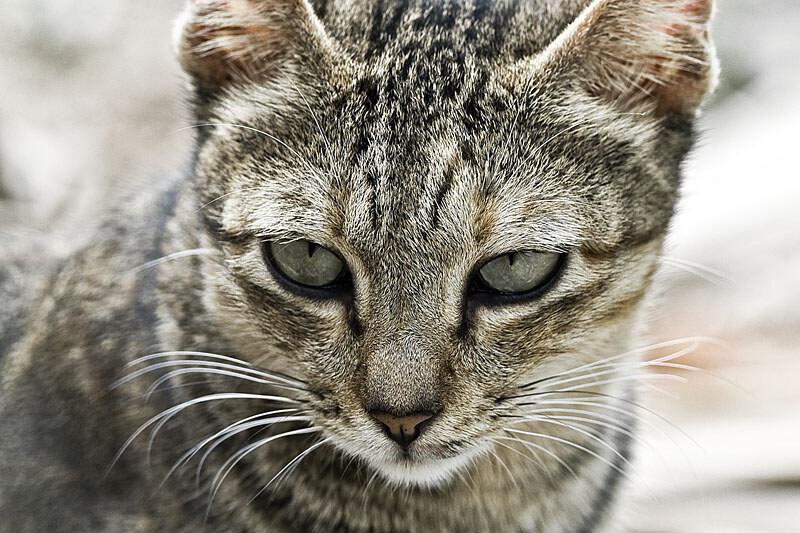 不怀好意的猫图片