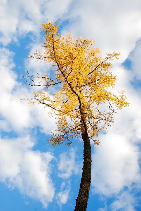 一棵树的囹�a_秋天的一棵树