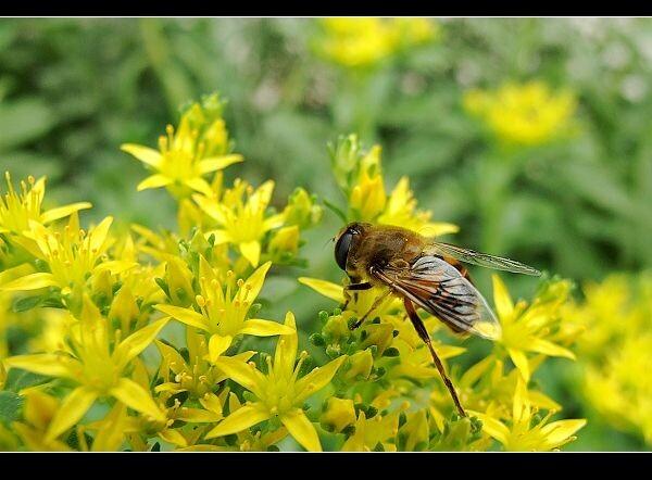 蜜蜂和猫简约边框背景