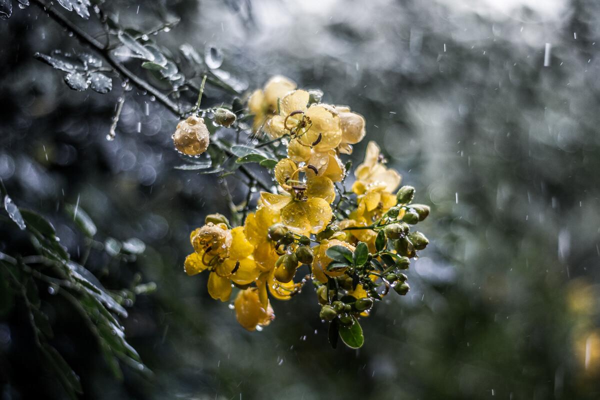 "<b>雨天</b> - 50mm, 色彩, 《咔啪》主题月赛""雨""作品征集 ..."