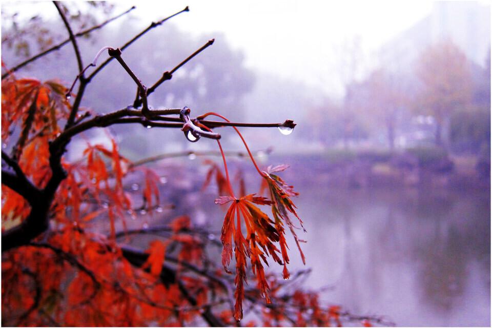 初冬下雨的早晨 临波静心
