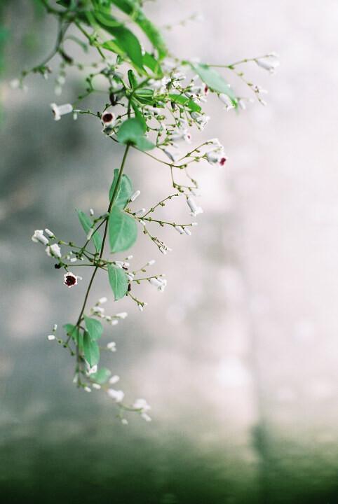 淡雅绿色 清新, 唯美, 色彩, 单反, 50mm, 小清新 淡雅绿色 bati