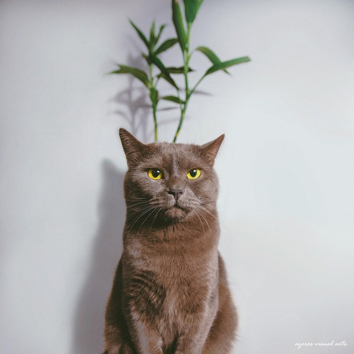 克力酋长 - 猫, 小清新, 胶片, 杭州, 动物 - 海螺壳图片