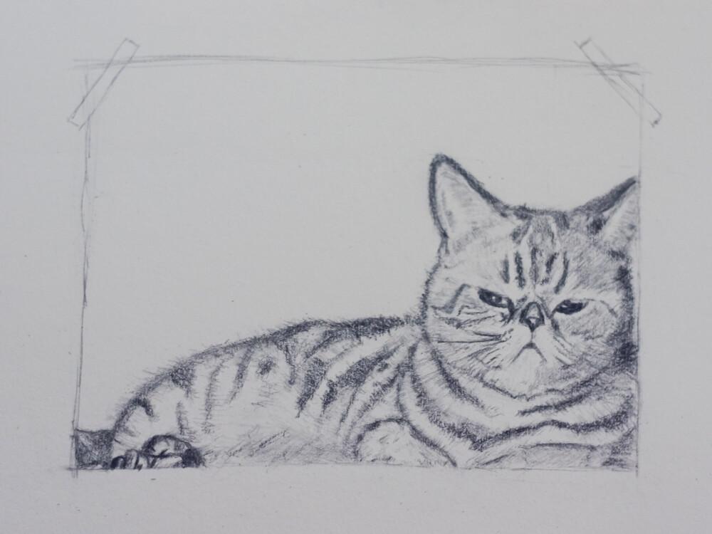 一只猫的素描过程