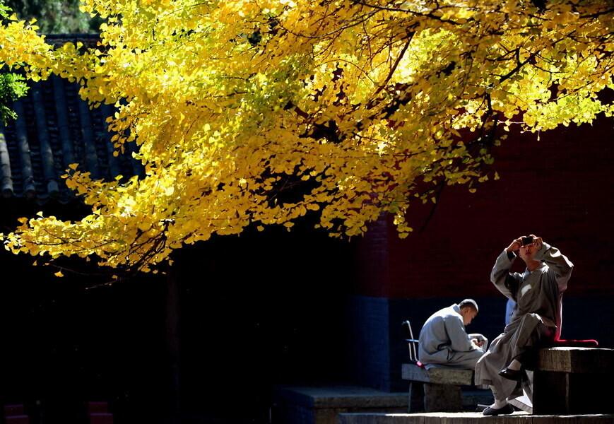 少林秋色 10月31日,两名僧人在河南登封嵩山少林寺内休息,拍照.图片