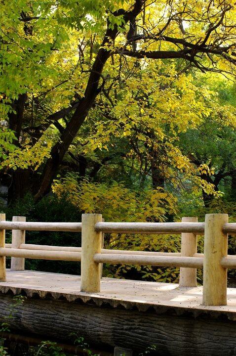 小木桥图片