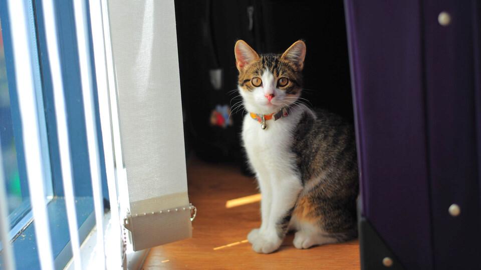 拜猫网_小清新,私房猫