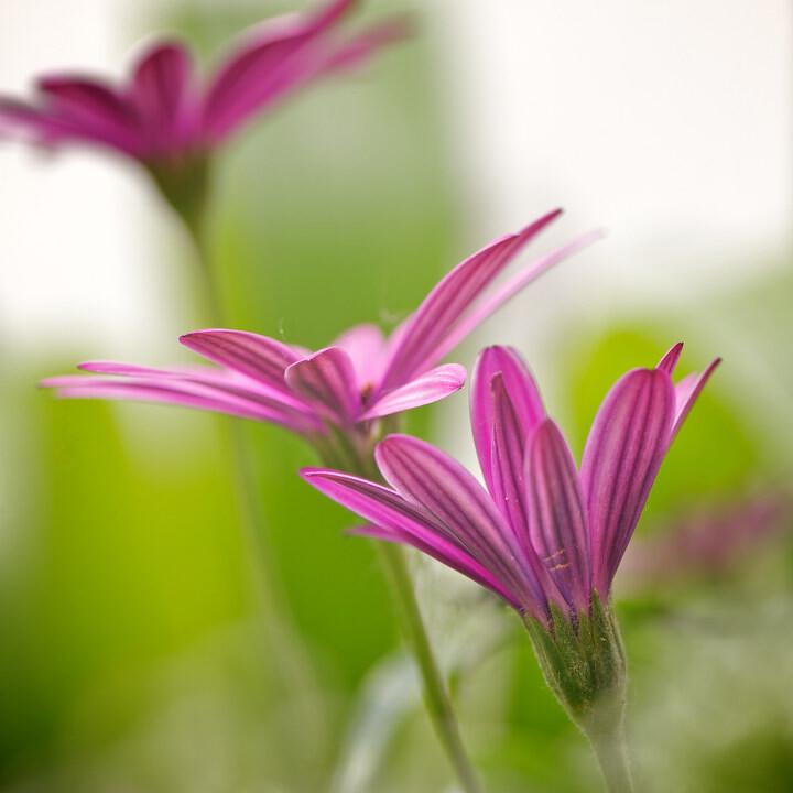 植物微距摄影作品微距摄影作品 人体微距摄影作品图 ...