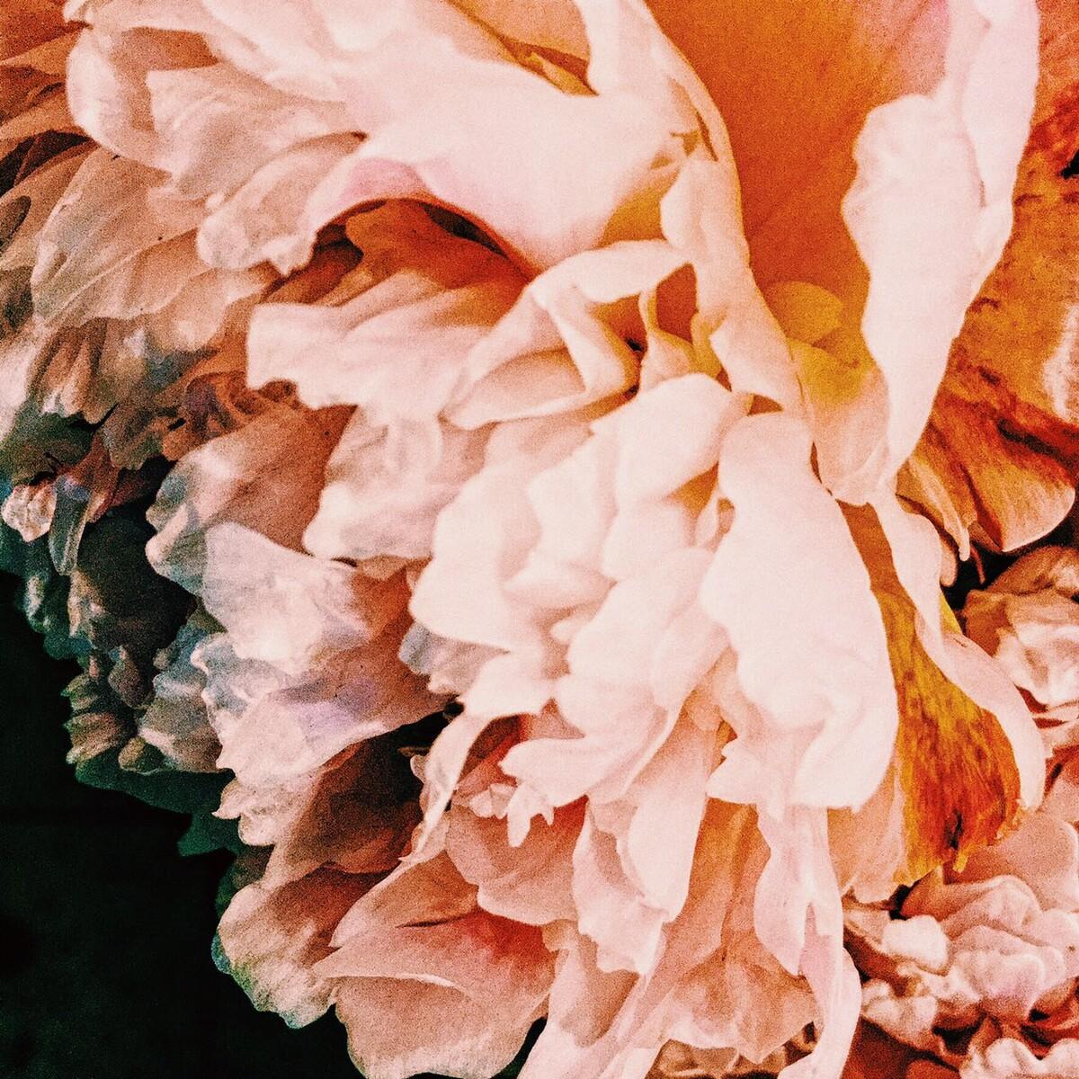 花殇 - 上海, 植物, 手机摄影, 花卉 - Ylin