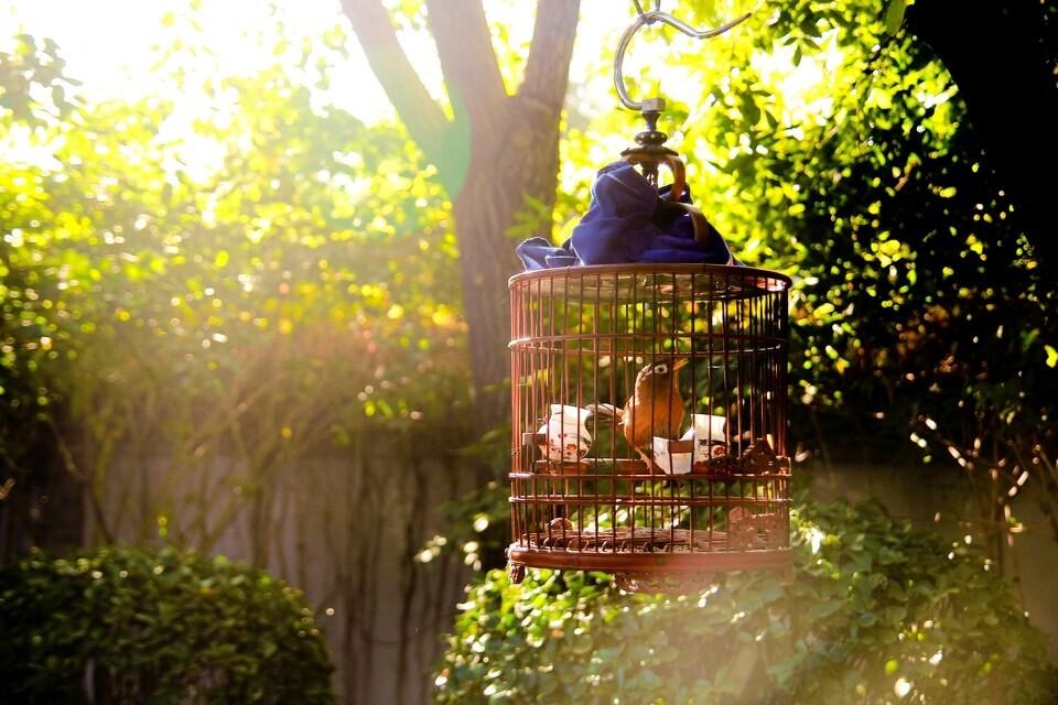 春日偶感之 - 鸟 (原创) - 牧歌悠扬 - 牧歌悠扬