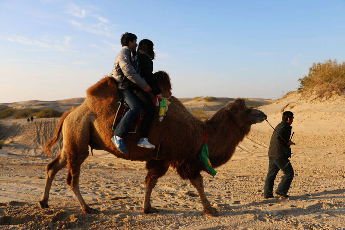壁纸 动物 骆驼 马 骑马 1200_800