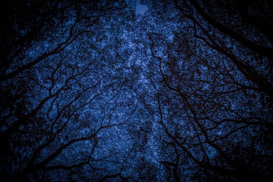 夜空下的树木枝桠指向静谧的空间