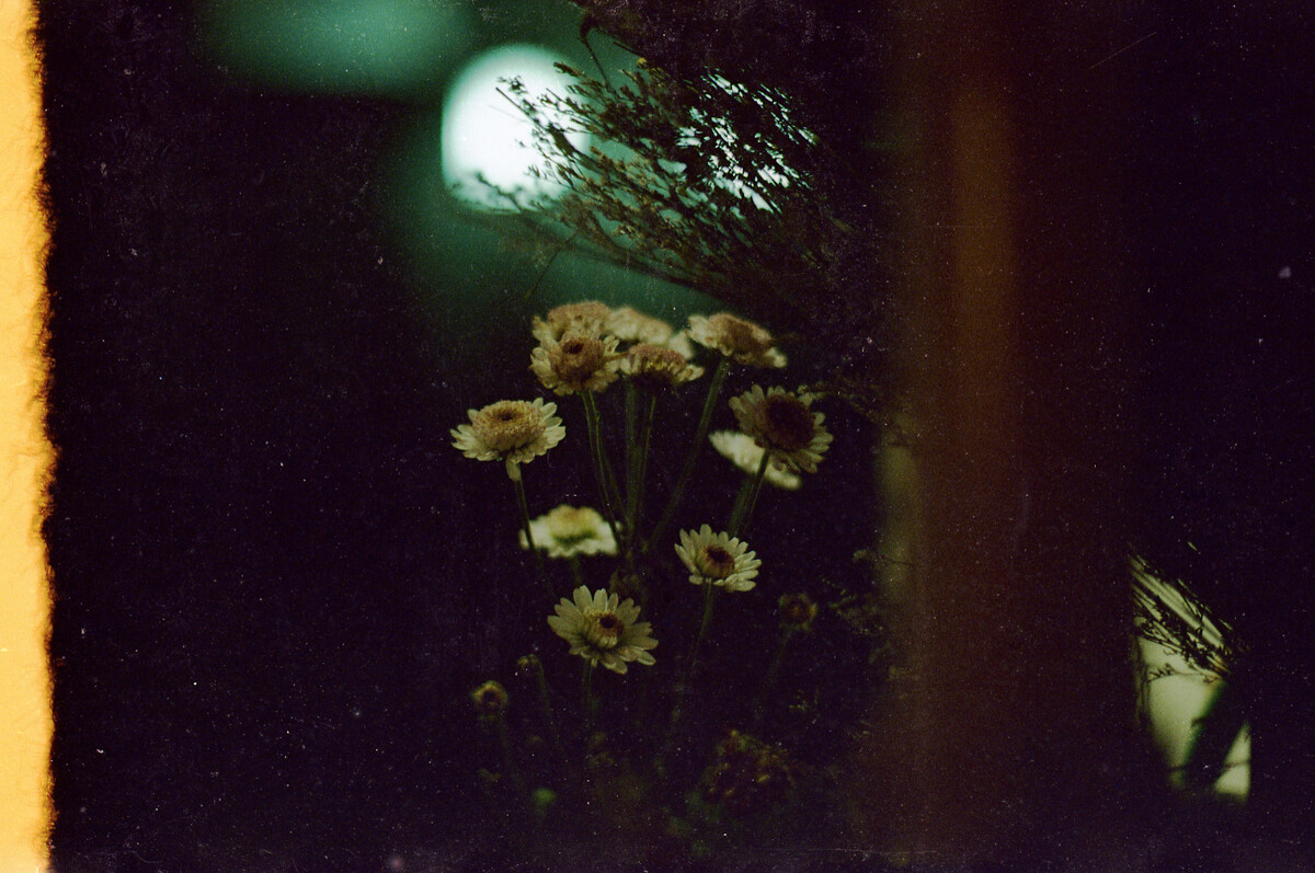 夜雏菊 深景 一家咖啡与照相馆 TERLLO 图虫摄影网