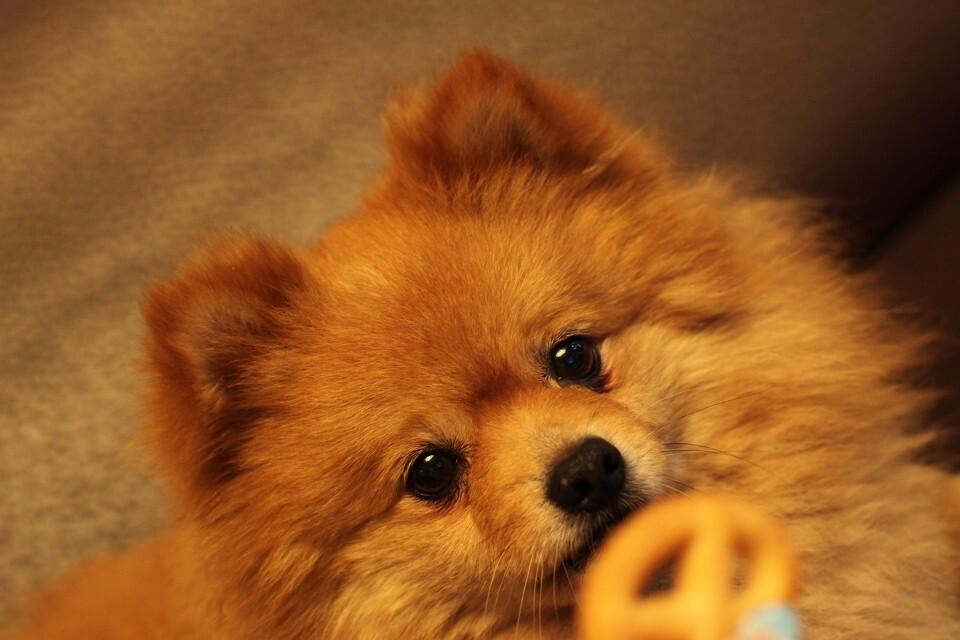 馋 +puppy+