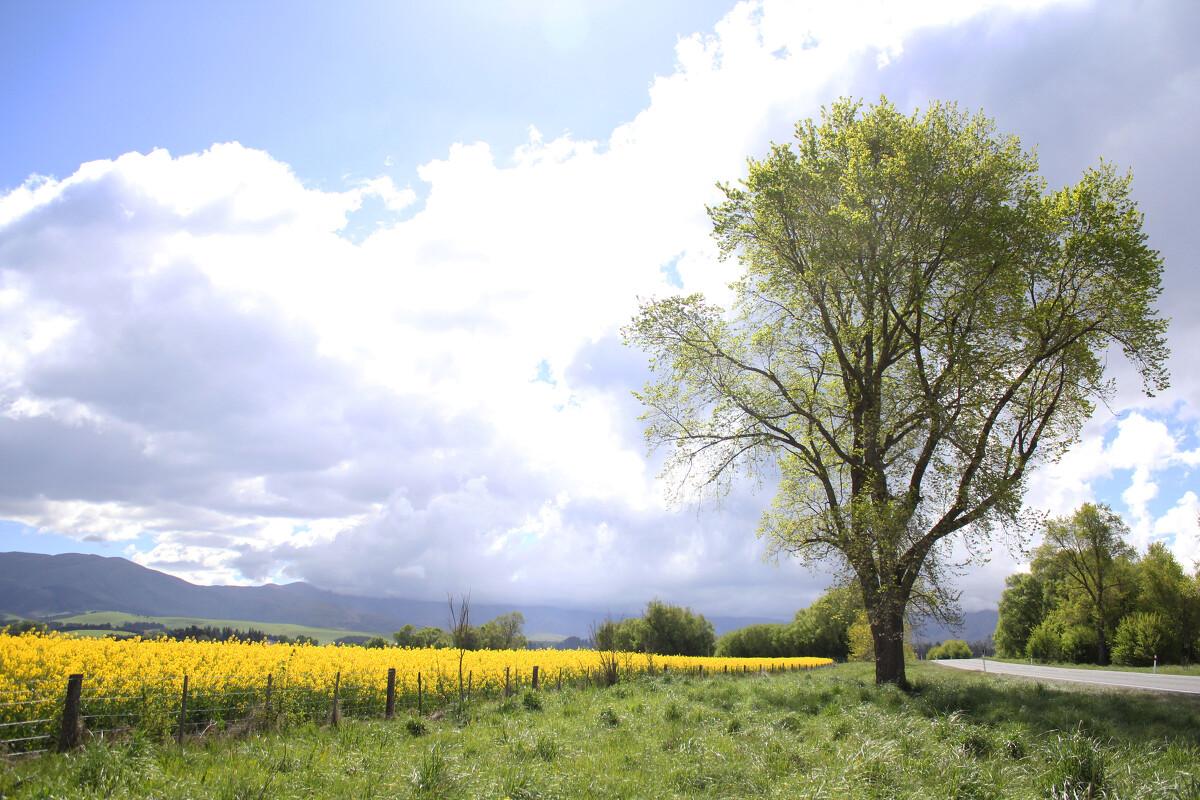 一棵树的囹�a_长成一棵树